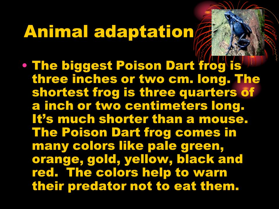 Animal adaptation The biggest Poison Dart frog is three inches or two cm. long. The shortest frog is three quarters of a inch or two centimeters long.