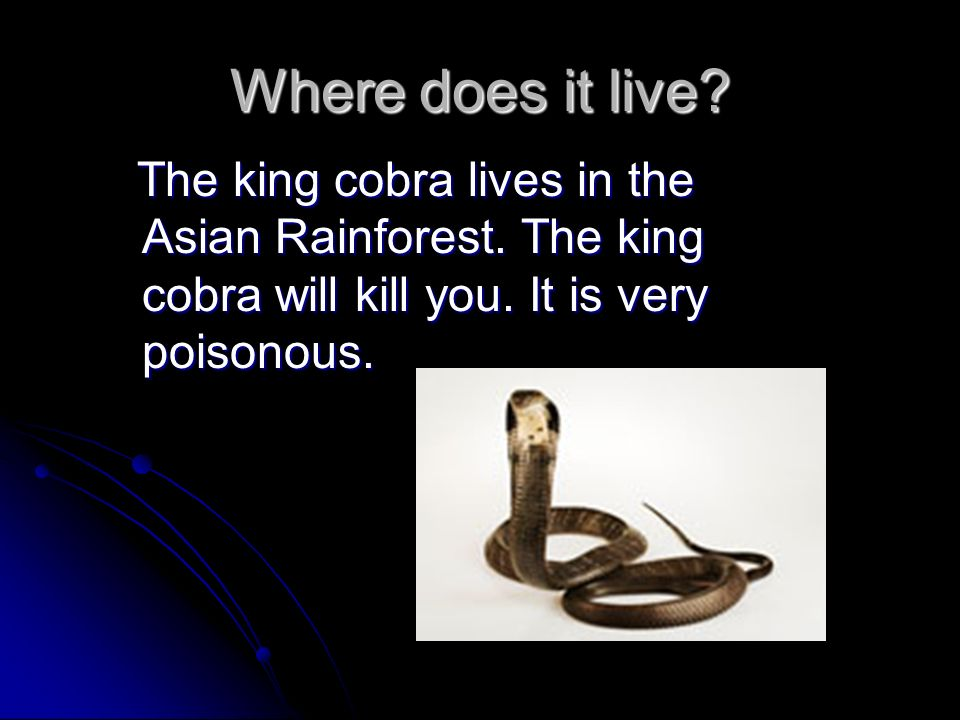 Where does it live.The king cobra lives in the Asian Rainforest.
