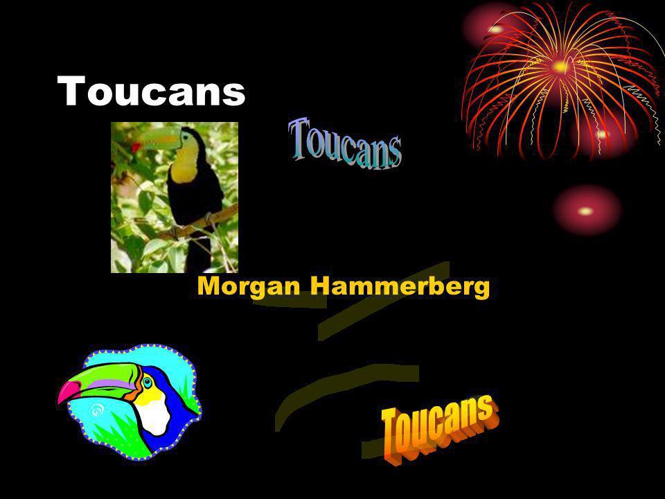 Toucans Morgan Hammerberg