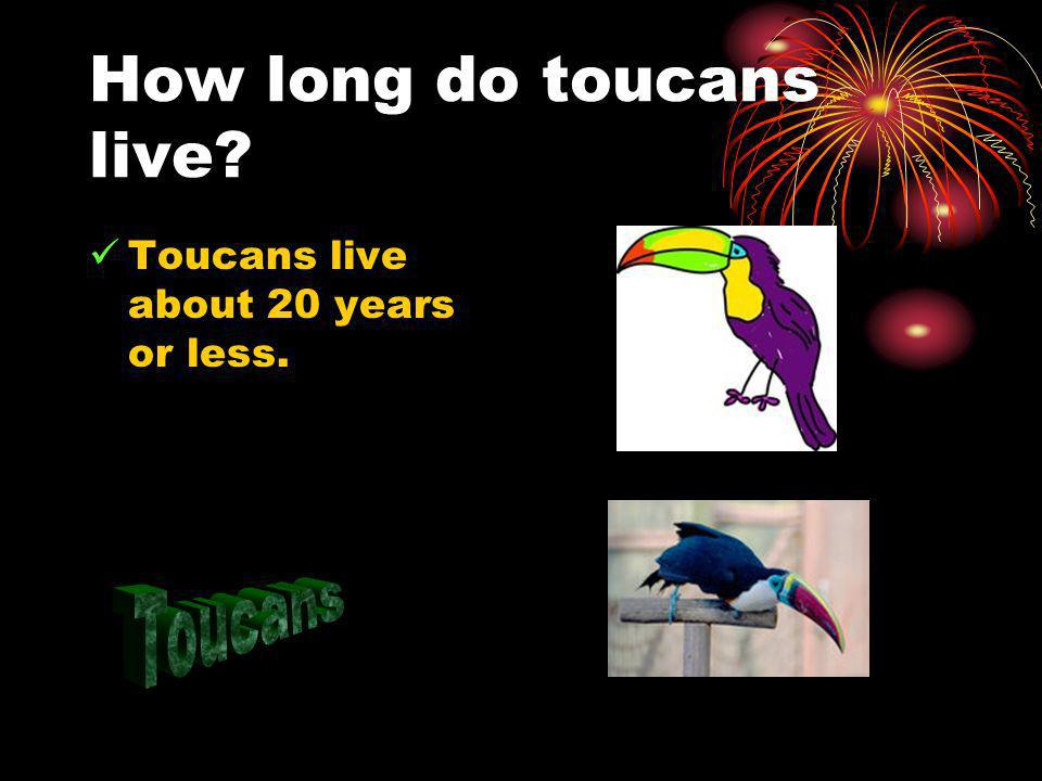How long do toucans live? Toucans live about 20 years or less.