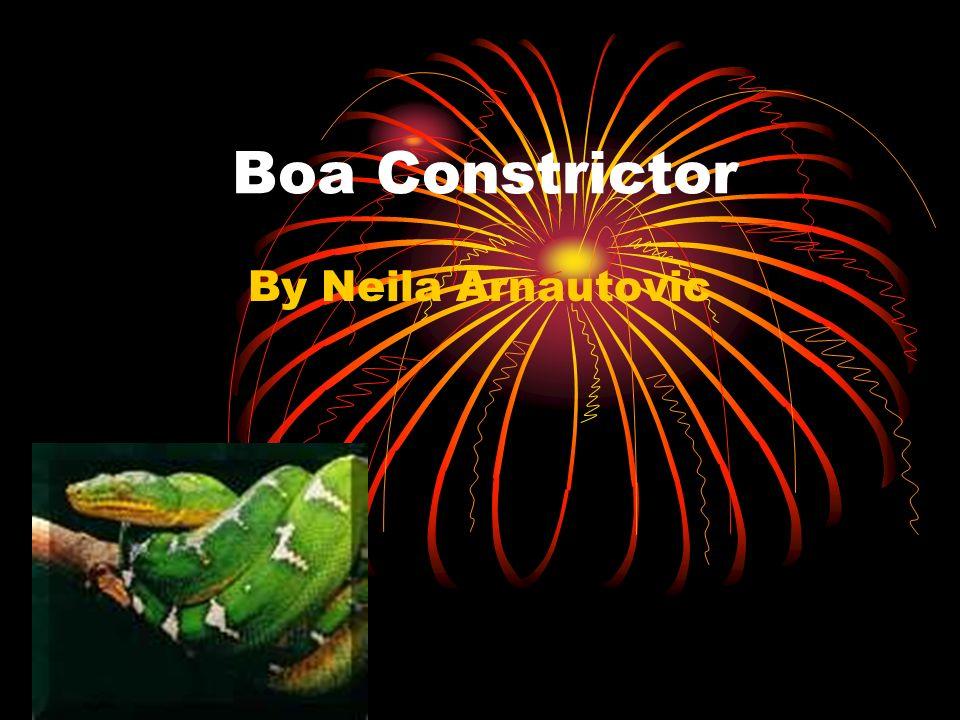 Boa Constrictor By Neila Arnautovic