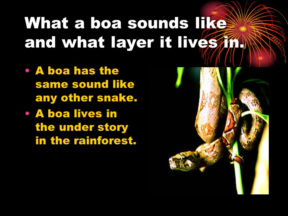 What a boa sounds like and what layer it lives in.
