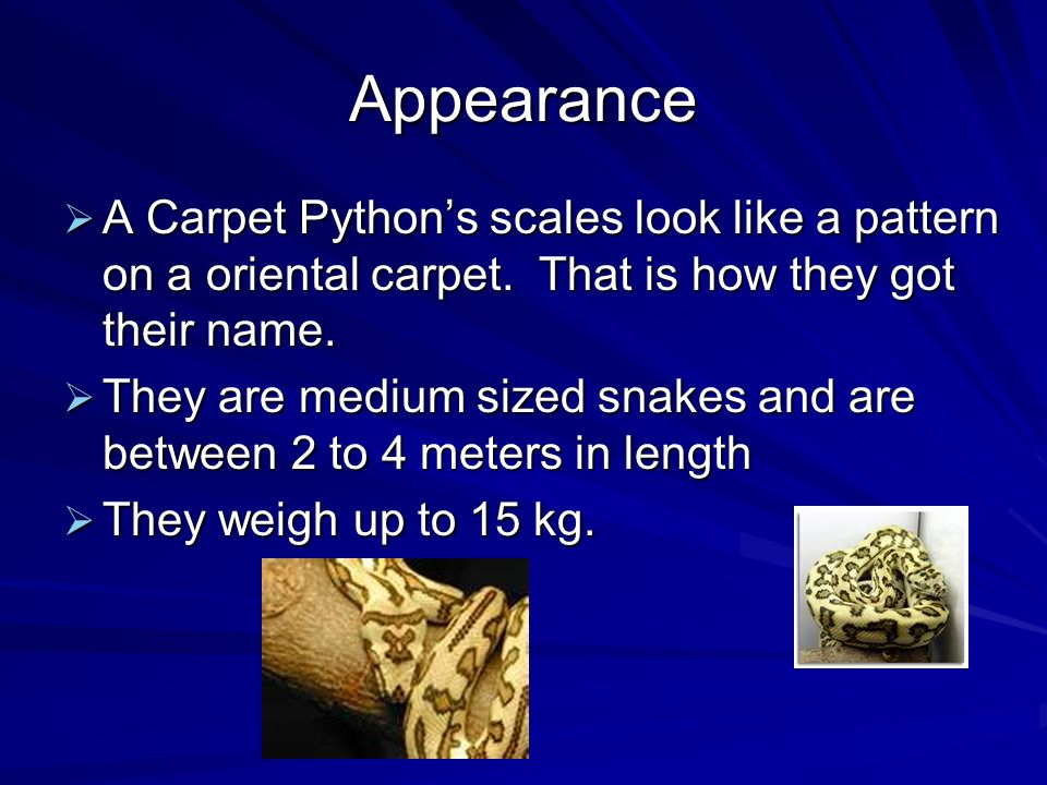 Appearance A Carpet Pythons scales look like a pattern on a oriental carpet.