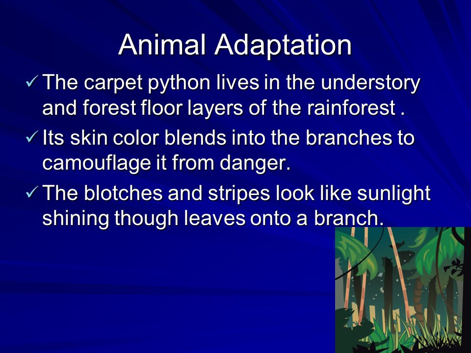 Animal Adaptation The carpet python lives in the understory and forest floor layers of the rainforest.