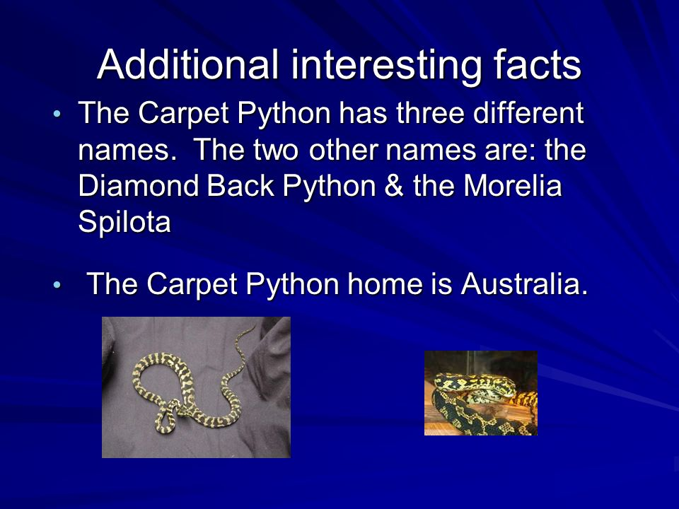 Additional interesting facts The Carpet Python has three different names.