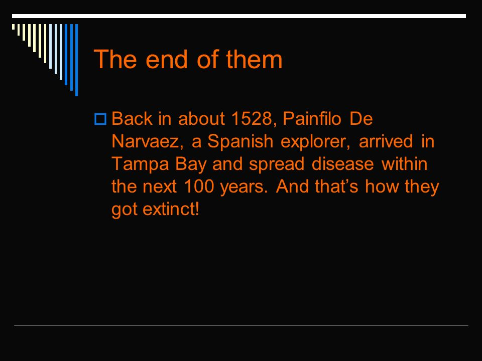 The end of them Back in about 1528, Painfilo De Narvaez, a Spanish explorer, arrived in Tampa Bay and spread disease within the next 100 years.