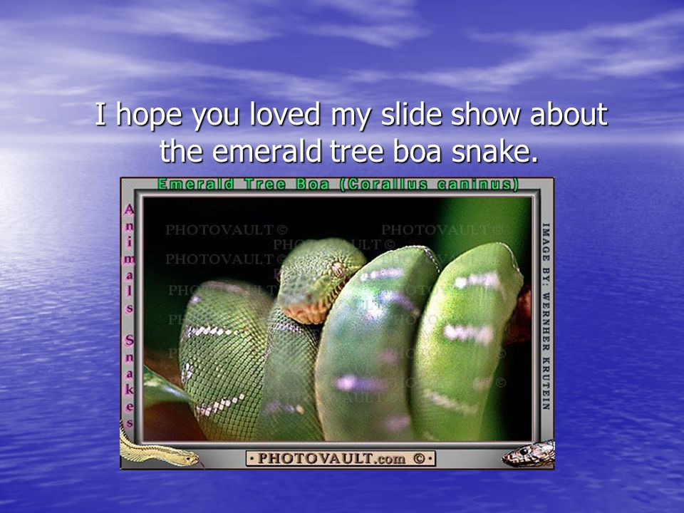 I hope you loved my slide show about the emerald tree boa snake.