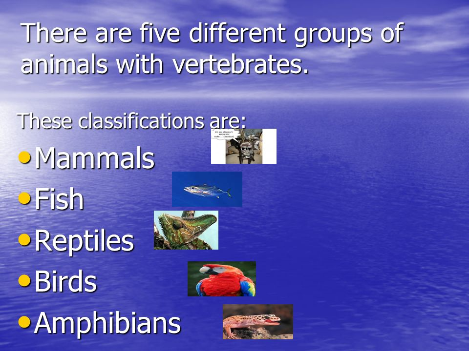 There are five different groups of animals with vertebrates. These classifications are: Mammals Mammals Fish Fish Reptiles Reptiles Birds Birds Amphib