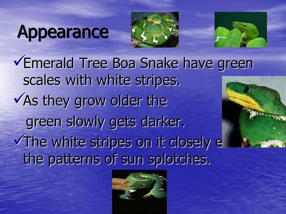 Appearance Emerald Tree Boa Snake have green scales with white stripes. Emerald Tree Boa Snake have green scales with white stripes. As they grow olde