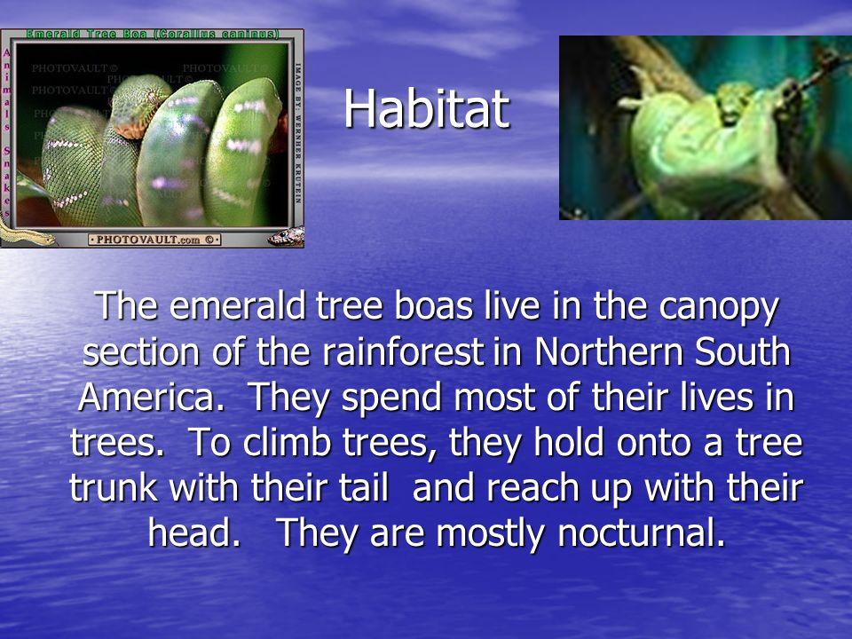 Behavior and social habits Emerald tree boas prey is small mammals and birds.