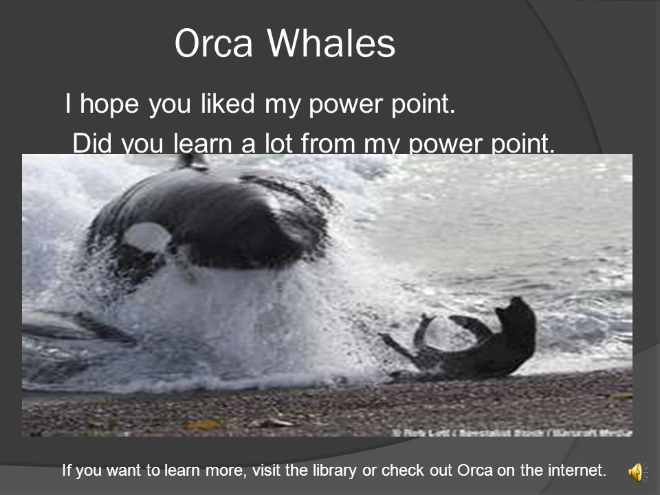 Interesting Facts An orca whale is a toothed whale. Orca whales live in waters around the world. Orca whales live in all of the areas that are red on