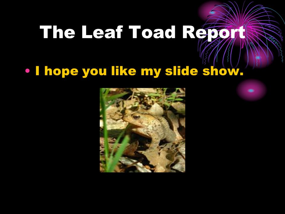 The Leaf Toad Report I hope you like my slide show.