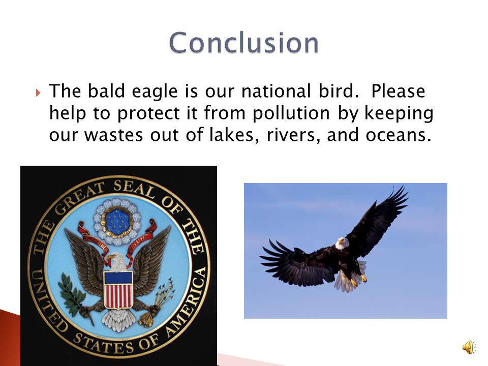 A bald eagles biggest enemy is people. Farmers used to kill Bald Eagles because they thought Bald Eagles ate farm animals. Eagles like dead or dying a
