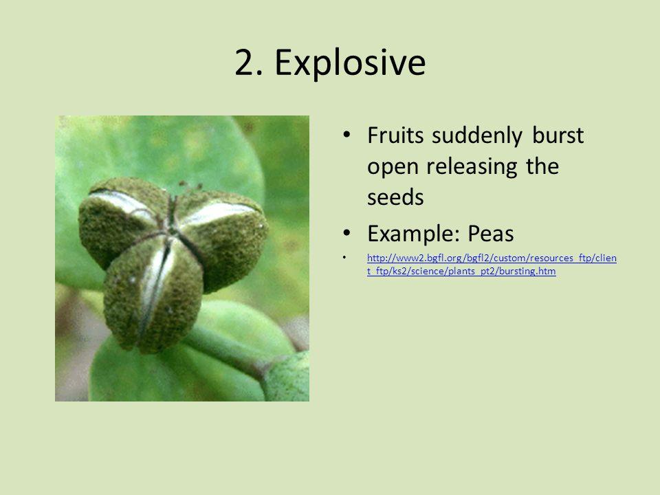 2. Explosive Fruits suddenly burst open releasing the seeds Example: Peas http://www2.bgfl.org/bgfl2/custom/resources_ftp/clien t_ftp/ks2/science/plan