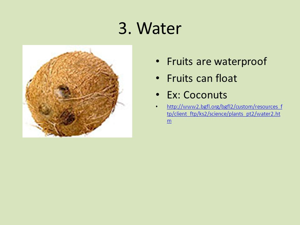 3. Water Fruits are waterproof Fruits can float Ex: Coconuts http://www2.bgfl.org/bgfl2/custom/resources_f tp/client_ftp/ks2/science/plants_pt2/water2