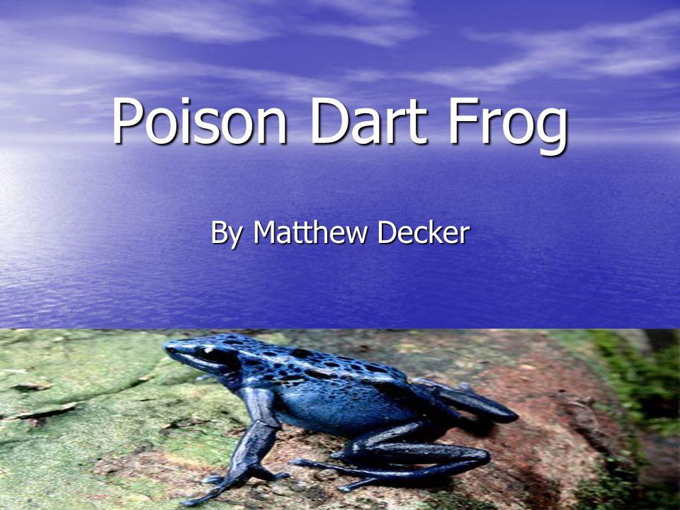I hope you enjoyed learning about the poison dart frog.