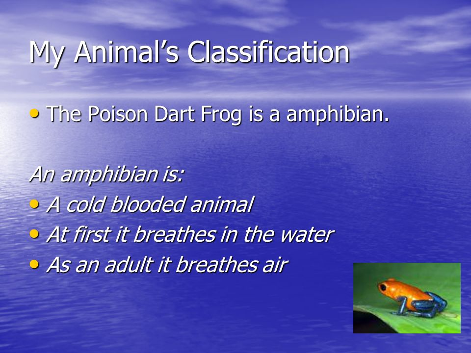 My Animals Classification The Poison Dart Frog is a amphibian. The Poison Dart Frog is a amphibian. An amphibian is: A cold blooded animal A cold bloo