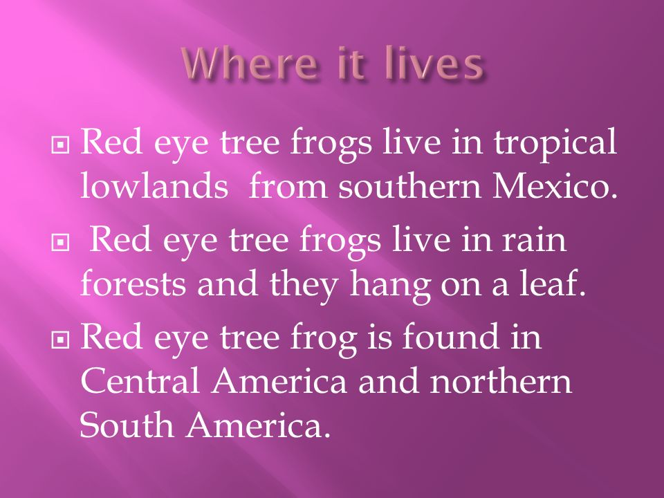 Red eye tree frogs live in tropical lowlands from southern Mexico.