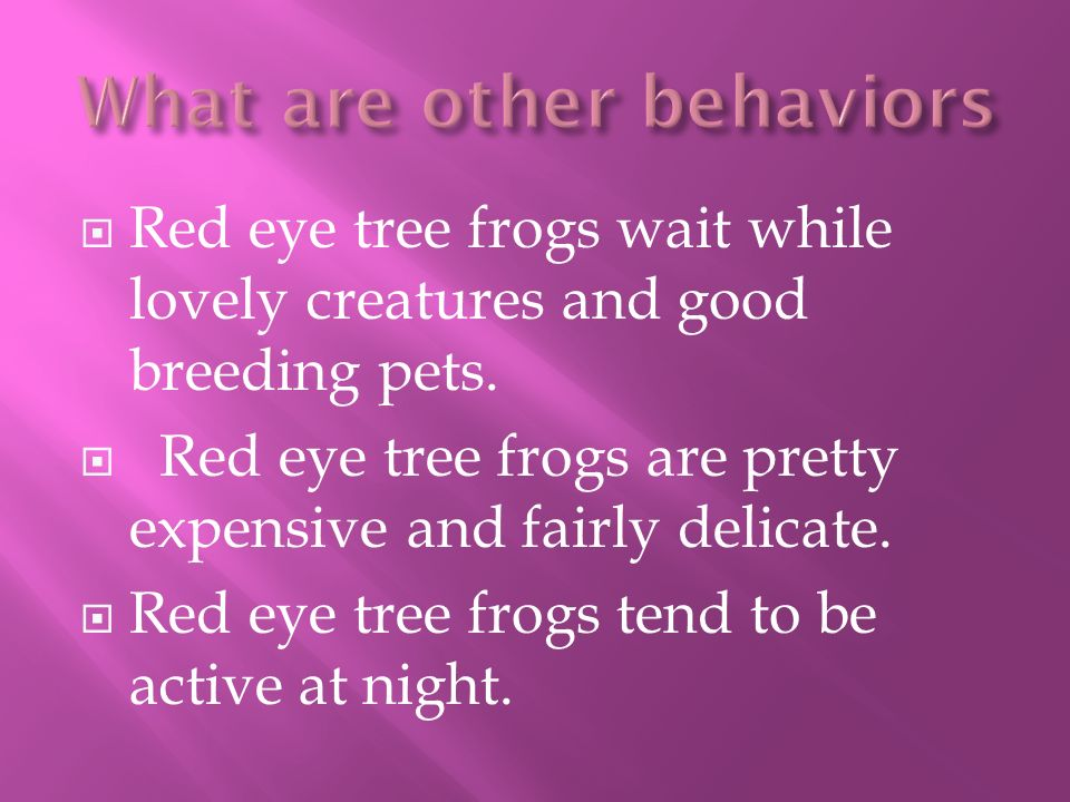 Red eye tree frogs wait while lovely creatures and good breeding pets.