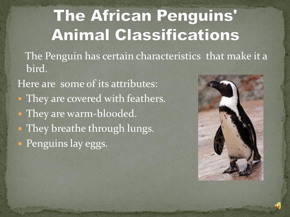 The Penguin has certain characteristics that make it a bird.