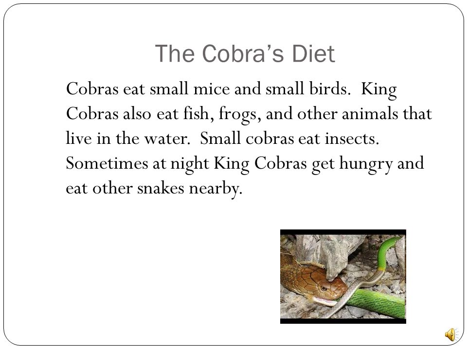 The Cobras Habitat Cobras live in nests on the ground. They live in grasslands and rainforests. King cobras climb on trees and swims in water. They li
