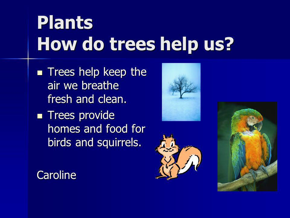 Plants What is Arbor day. Arbor day is a special day to celebrate trees.