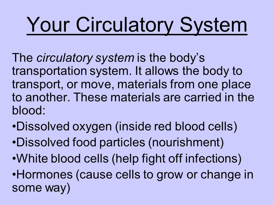 Your Circulatory System The circulatory system is the bodys transportation system. It allows the body to transport, or move, materials from one place