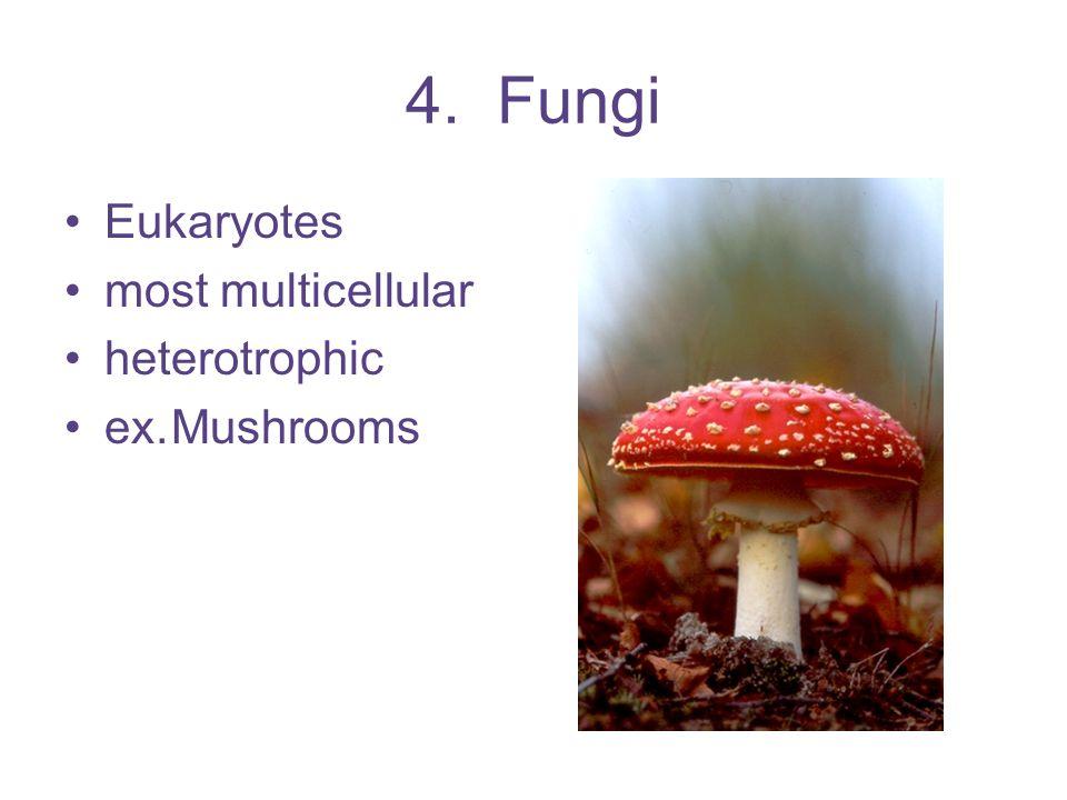 4. Fungi Eukaryotes most multicellular heterotrophic ex.Mushrooms