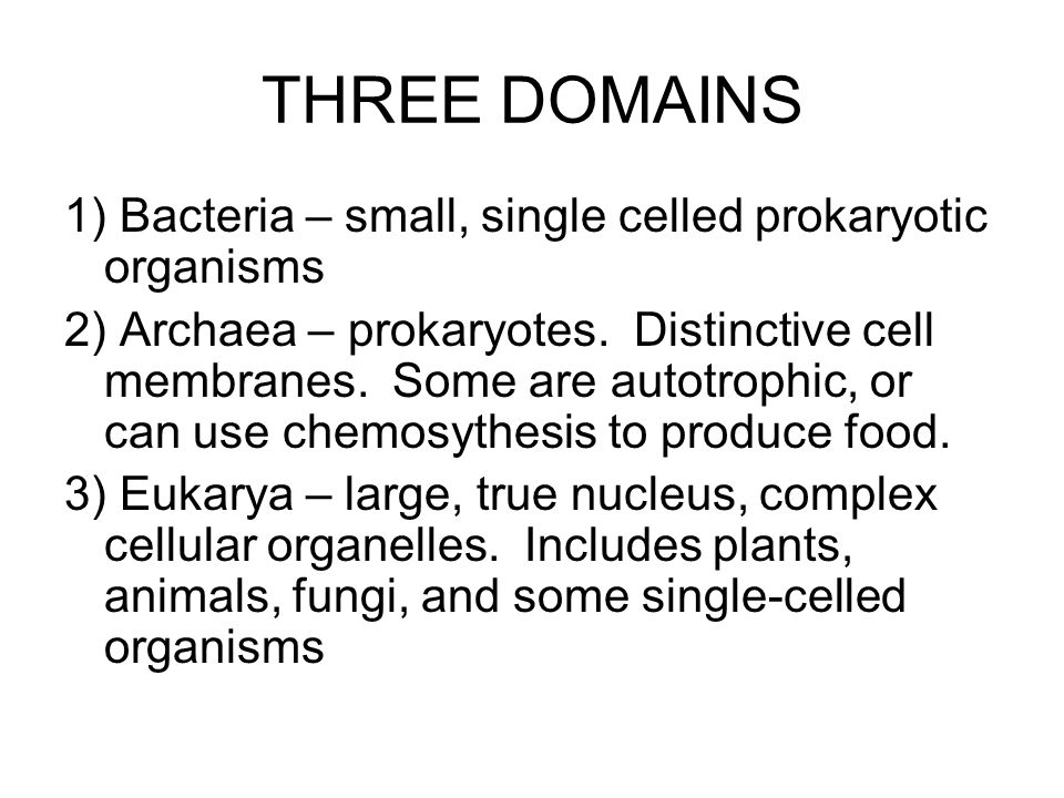 THREE DOMAINS 1) Bacteria – small, single celled prokaryotic organisms 2) Archaea – prokaryotes. Distinctive cell membranes. Some are autotrophic, or