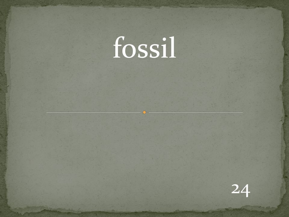 24 fossil