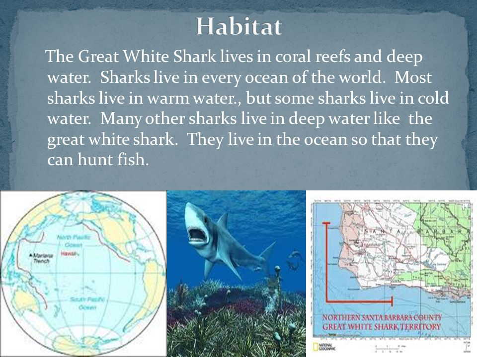 The Great White Shark lives in coral reefs and deep water. Sharks live in every ocean of the world. Most sharks live in warm water., but some sharks l