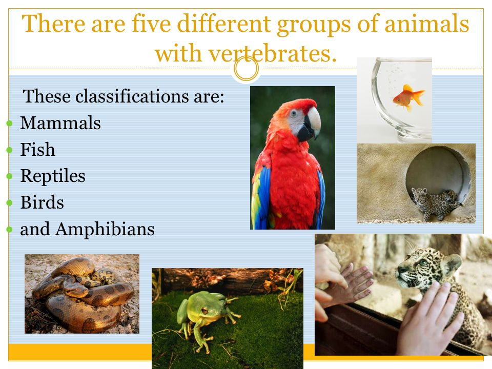 There are five different groups of animals with vertebrates. These classifications are: Mammals Fish Reptiles Birds and Amphibians