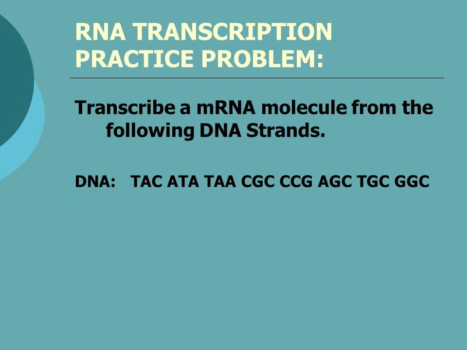 RNA TRANSCRIPTION PRACTICE PROBLEM: Transcribe a mRNA molecule from the following DNA Strands. DNA: TAC ATA TAA CGC CCG AGC TGC GGC