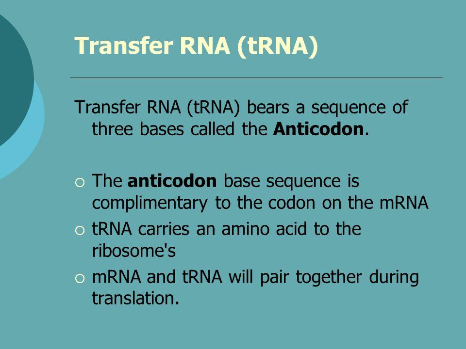 Transfer RNA (tRNA) Transfer RNA (tRNA) bears a sequence of three bases called the Anticodon. The anticodon base sequence is complimentary to the codo
