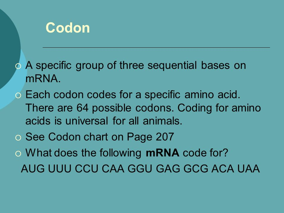 Codon A specific group of three sequential bases on mRNA. Each codon codes for a specific amino acid. There are 64 possible codons. Coding for amino a