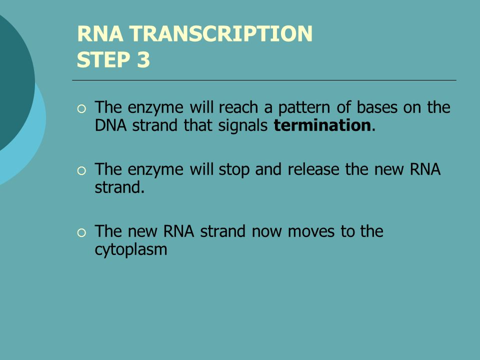 RNA TRANSCRIPTION STEP 3 The enzyme will reach a pattern of bases on the DNA strand that signals termination. The enzyme will stop and release the new