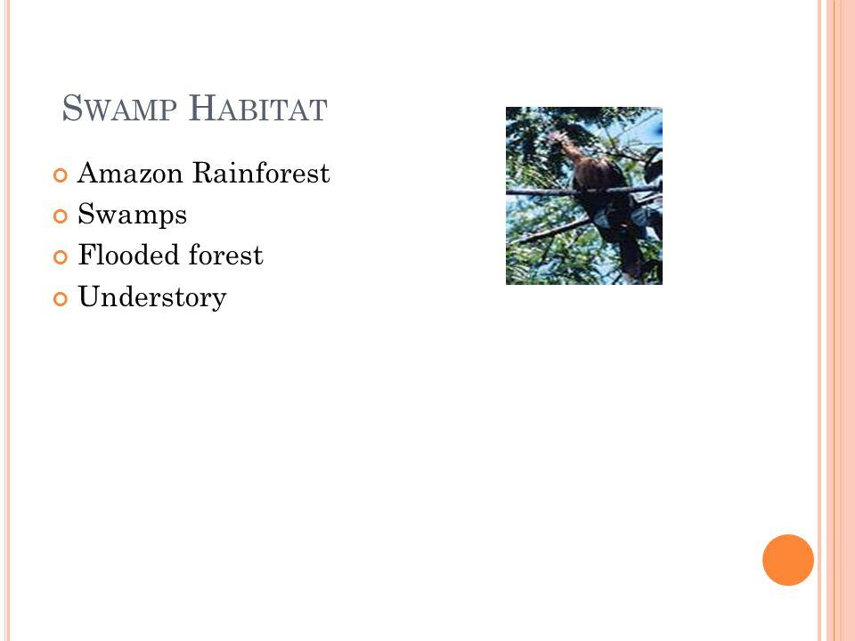 S WAMP H ABITAT Amazon Rainforest Swamps Flooded forest Understory