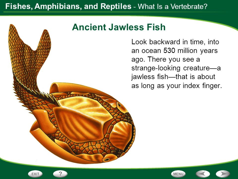 Fishes, Amphibians, and Reptiles - What Is a Vertebrate? Ancient Jawless Fish Look backward in time, into an ocean 530 million years ago. There you se