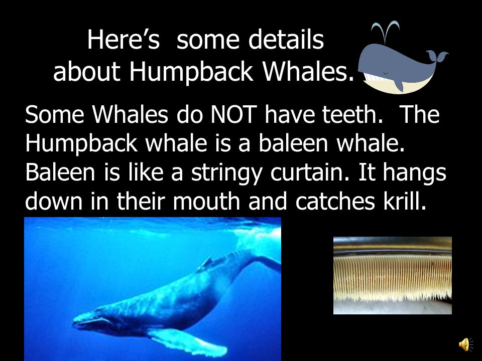 Heres some details about Humpback Whales.Heres some details about Humpback Whales.