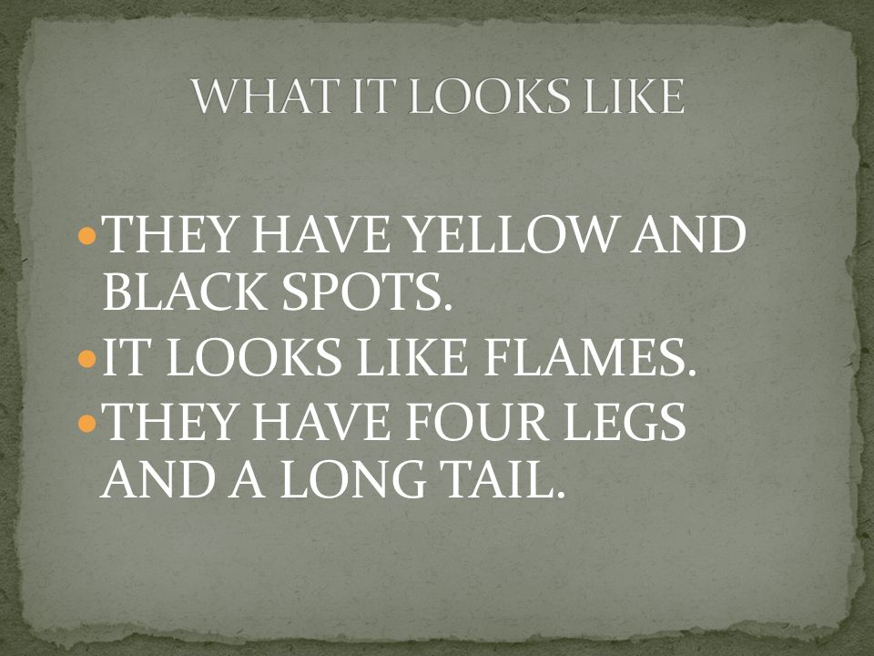 THEY HAVE YELLOW AND BLACK SPOTS. IT LOOKS LIKE FLAMES. THEY HAVE FOUR LEGS AND A LONG TAIL.