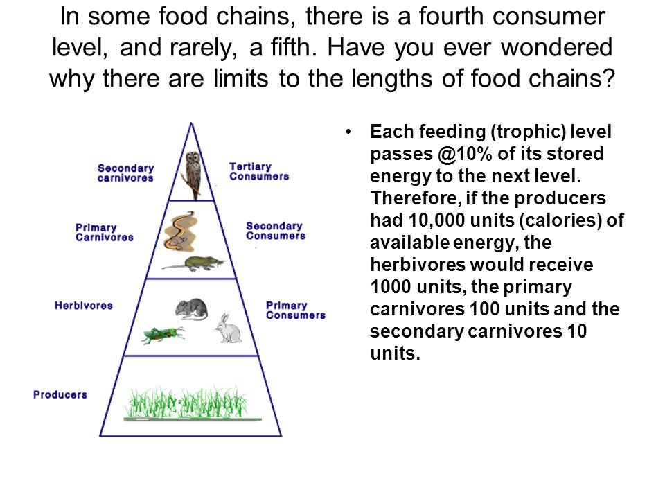 Energy Pyramids An energy pyramid is a graphical model of energy flow in a community. The different levels represent different groups of organisms tha