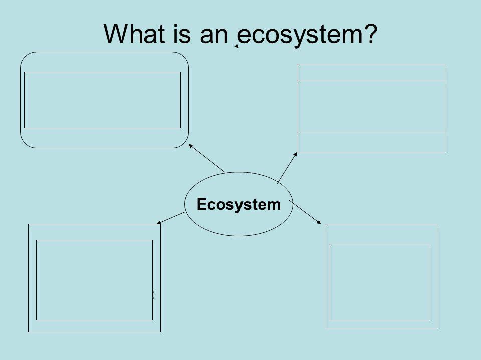 Vocabulary EcosystemHabitat CommunityPopulation NicheEnergy pyramid Cycle