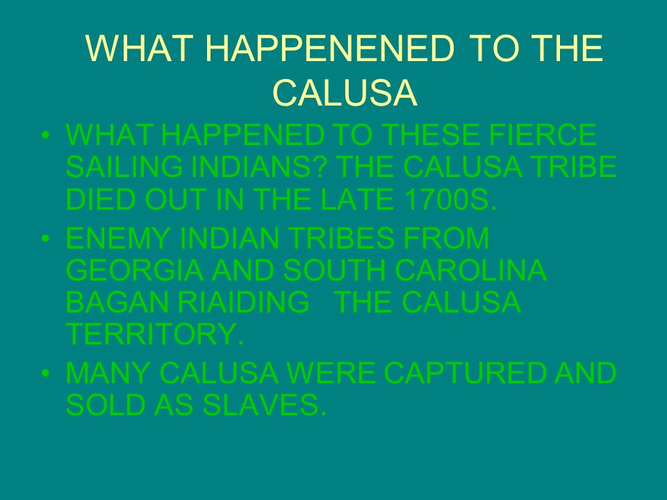WHAT HAPPENENED TO THE CALUSA WHAT HAPPENED TO THESE FIERCE SAILING INDIANS.