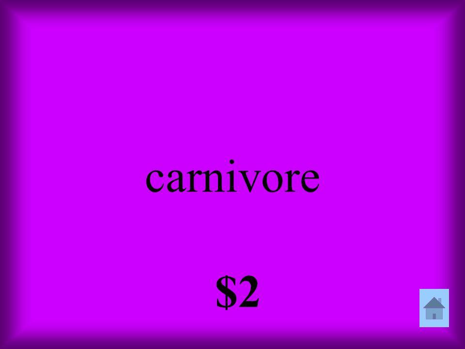 carnivore $2