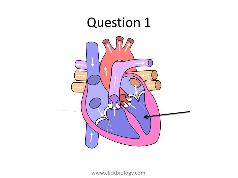 www.clickbiology.com Question 1