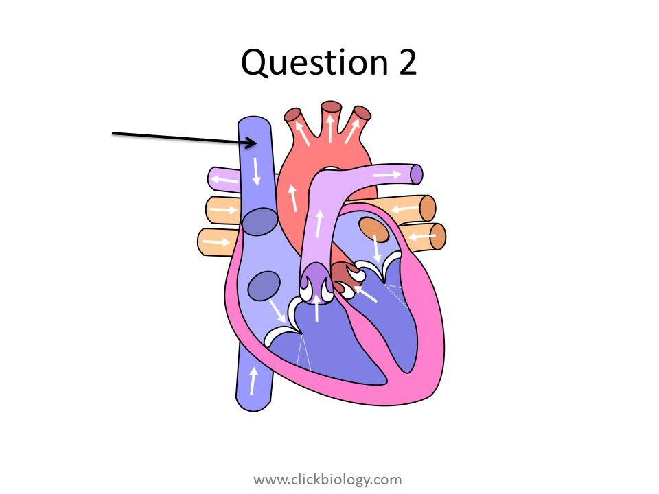 www.clickbiology.com Question 2