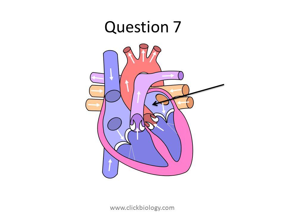 www.clickbiology.com Question 7