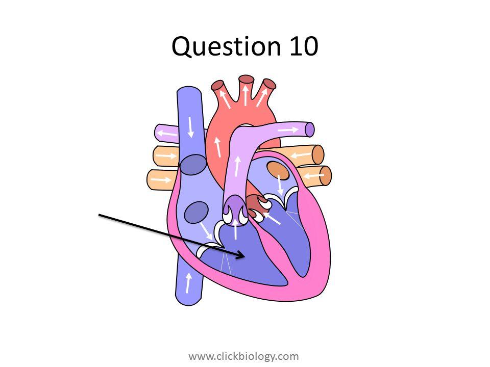 www.clickbiology.com Question 10