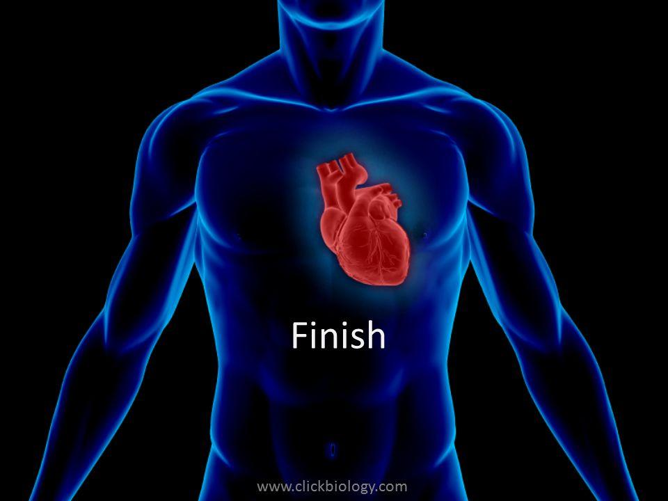 www.clickbiology.com Finish