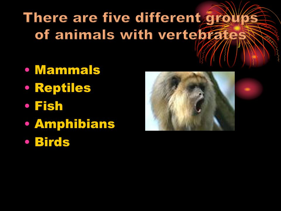 Are warm blooded Have hair or fur Give birth to live young Feed their babies with mothers milk Breathe through lungs